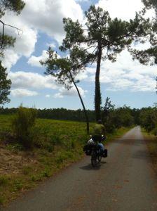Der Radweg verläuft größtenteils im Wald